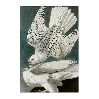 Art Mural En Acrylique Beaux-arts de Gyrfalcon par John Audubon