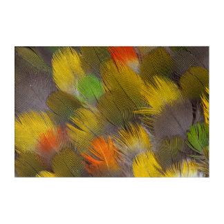 Art Mural En Acrylique Conception de plume de perroquet