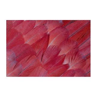 Art Mural En Acrylique Conception de plume de perroquet de gris africain