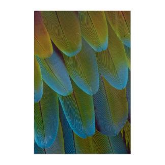 Art Mural En Acrylique Détail de motif de plume de perroquet d'ara