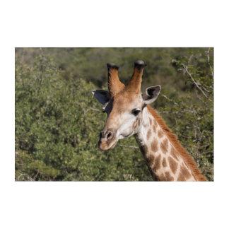 Art Mural En Acrylique Détail principal de girafe