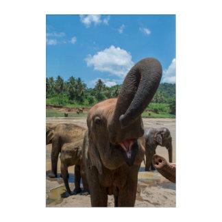 Art Mural En Acrylique Eau potable d'éléphant, Sri Lanka