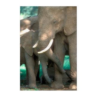 Art Mural En Acrylique Éléphants protégeant des jeunes
