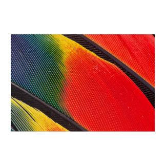 Art Mural En Acrylique Fermez-vous des plumes de perroquet d'Amazone