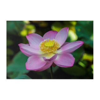 Art Mural En Acrylique Fleur de lotus de floraison, Indonésie