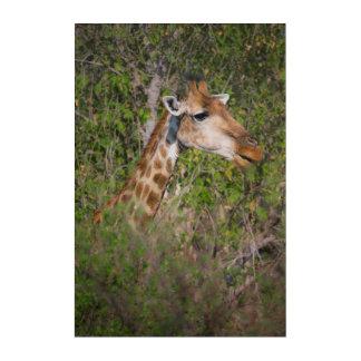 Art Mural En Acrylique Girafe mangeant le feuille