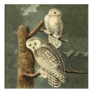 Art Mural En Acrylique Illustration d'illustration d'art d'oiseau