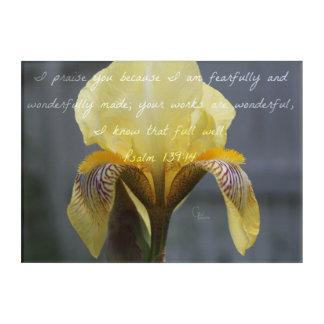 Art Mural En Acrylique Iris de zèbre de jaune de 139:14 de psaume
