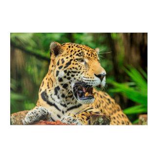 Art Mural En Acrylique Jaguar montre ses dents, Belize
