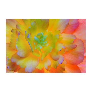 Art Mural En Acrylique Le bégonia rougeoyant fleurissent | Seabeck, WA