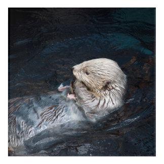 Art Mural En Acrylique Loutre mangeant le zoo sauvage aquatique de nature