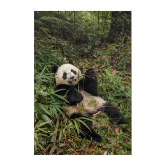 Art Mural En Acrylique Panda mignon mangeant le bambou