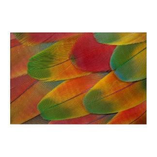 Art Mural En Acrylique Plumes de perroquet d'ara de harlequin