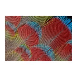Art Mural En Acrylique Plumes Faucon-Dirigées rouges de perroquet