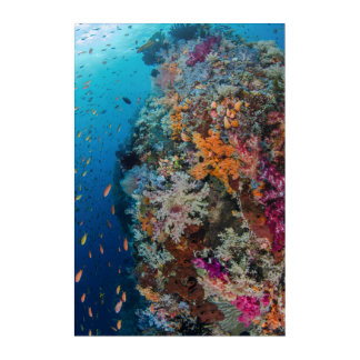 Art Mural En Acrylique Poissons et récif coralien pittoresques