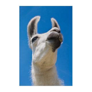 Art Mural En Acrylique Portrait de lama