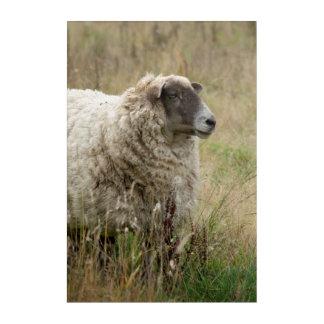 Art Mural En Acrylique Portrait de moutons