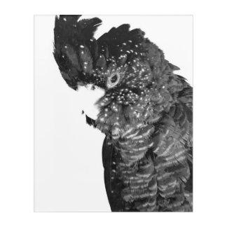 Art Mural En Acrylique Portrait noir et blanc de cacatoès
