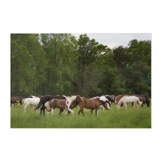 Art Mural En Acrylique Troupeau de chevaux, Tennessee