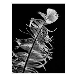 Art photographique noir et blanc de plume carte postale