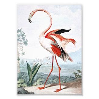 Art rose de cru d'oiseau de flamant photos d'art