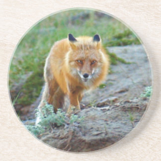 Art sauvage de photo de faune de renarde de Fox Dessous De Verre En Grès