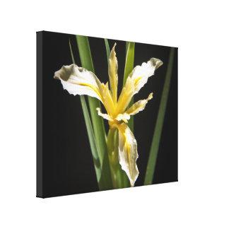 Art sauvage de toile d'orchidée