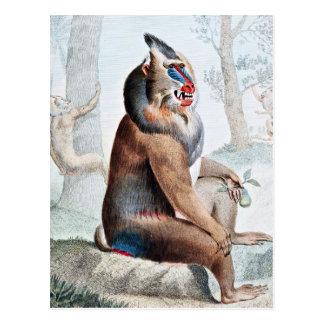 Art varié de cru de babouin carte postale