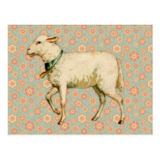 Art vintage d'agneau carte postale