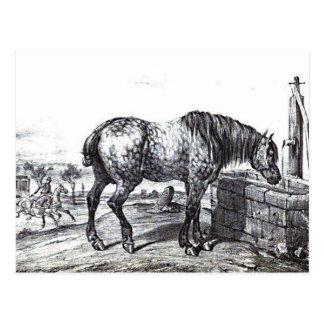 Art vintage de dessin de cheval de Percheron Carte Postale
