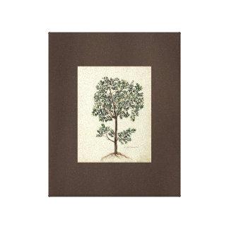 Art vintage dessinant la toile botanique d'olivier toiles