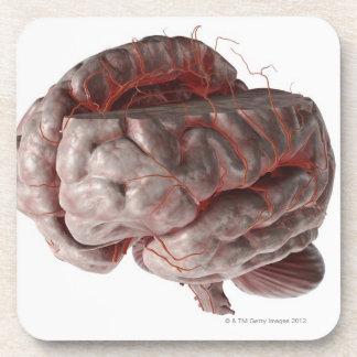 Artères du cerveau 3 sous-bock