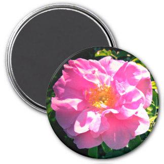 Assez dans le rose de rose aimant