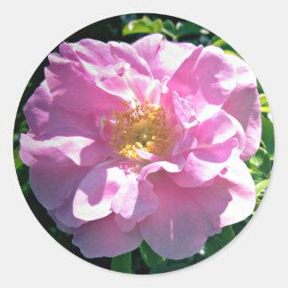 Assez dans le rose de rose sticker rond