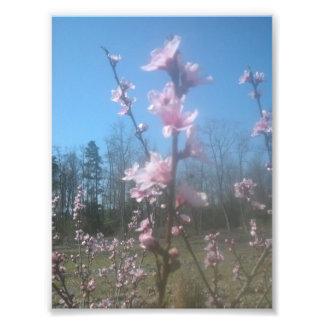 Assez rose tirage photo