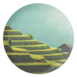 Assiette agriculture Asie verte