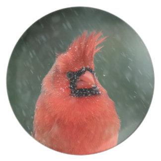 Assiette Cardinal dans un pin pendant une tempête de neige