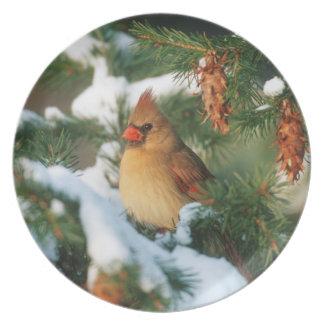 Assiette Cardinal du nord dans l'arbre, l'Illinois