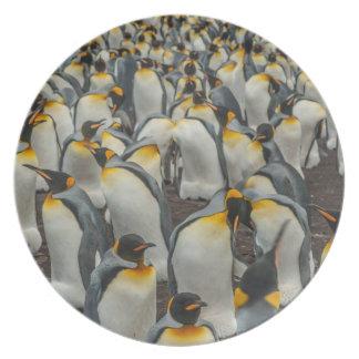 Assiette Colonie de pingouin de roi, Malouines