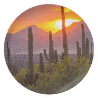 Assiette Coucher du soleil de cactus de désert, Arizona