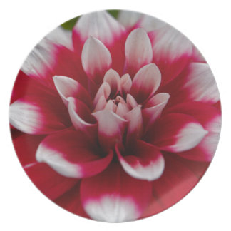 Assiette Dahlia rouge et blanc (hortensis de dahlia X)