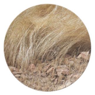 Assiette Détail d'un champ de teff pendant la récolte