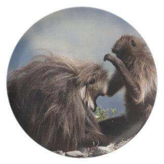 Assiette Deux babouins de gelada (gelada de Theropithecus)