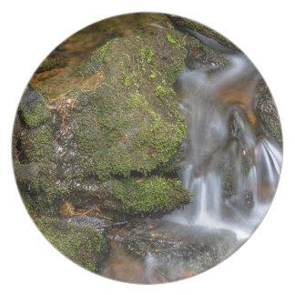Assiette Écoulement d'eau vert et moussu