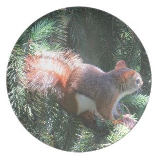 Assiette Écureuil rouge