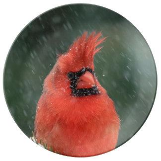 Assiette En Porcelaine Cardinal dans un pin en hiver