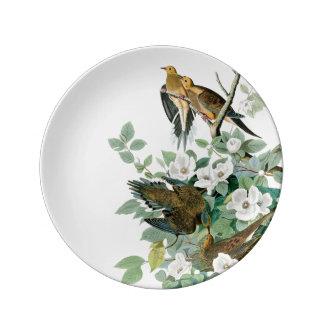 Assiette En Porcelaine Colombe de tortue de la Caroline, oiseaux de
