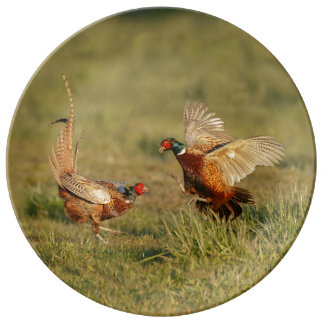 Assiette En Porcelaine Combat masculin de deux faisans d'anneau-cou