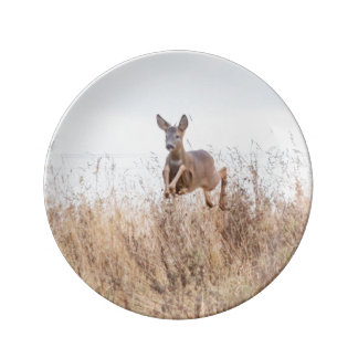 Assiette En Porcelaine Photographie de cerfs communs