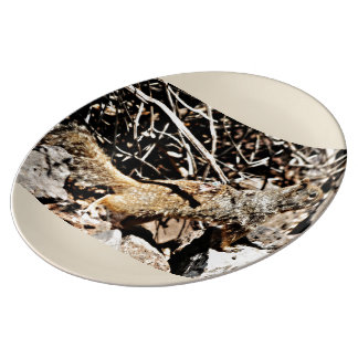 Assiette En Porcelaine Plat de porcelaine d'écureuil de Sonoran